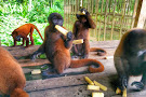 La Isla De Los Monos