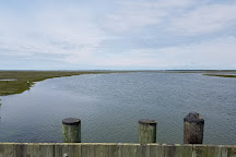 Jacques Cousteau National Estuarine Research Reserve, Tuckerton, United States