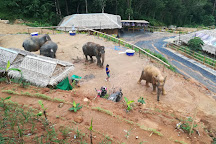 Elephant Jungle Sanctuary Phuket Offices, Patong, Thailand