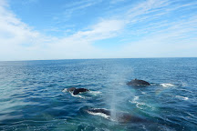 Hyannis Whale Watcher Cruises, Barnstable, United States