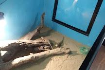 Luke's Reptile Kingdom, Surfers Paradise, Australia