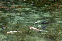 Monet's Pond, Seki, Japan