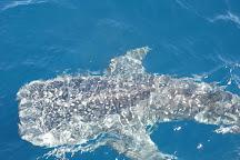 Ocean Eco Adventures, Exmouth, Australia