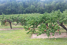 Pryor's Orchard, Thurmont, United States