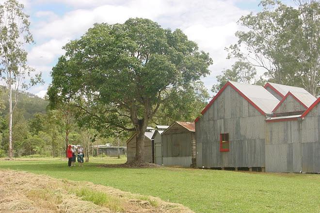 Curtain Fig National Park, Yungaburra, Australia