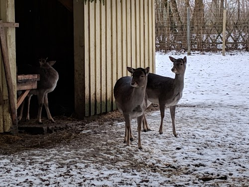 loomapark