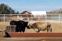 Farm Sanctuary Animal Acres, Acton, United States