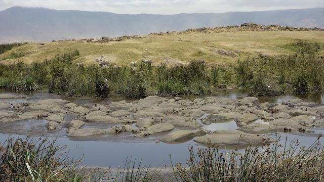 Serengeti Sons Safaris