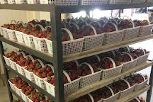 Watson Farm Market, Bowmanville, Canada