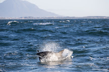 Apex Shark Expeditions, Simon's Town, South Africa