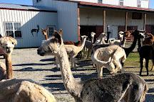 Zena Suri Alpacas, Jay, United States