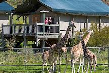 Safari West, Santa Rosa, United States