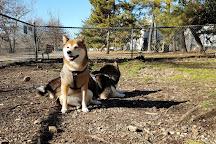 Shirlington Dog Park, Arlington, United States