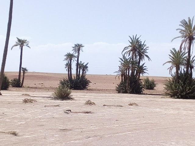 SM Desert