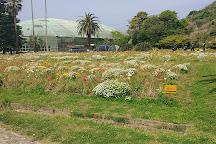 Shirahama Flower Park, Minamiboso, Japan