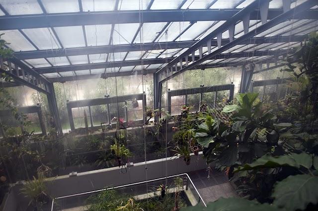 Invernadero Real Jardín Botánico