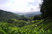 Eco Cameron Travel & Tours, Cameron Highlands, Malaysia