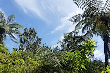 Coromandel Forest Park, Coromandel, New Zealand