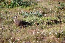Langwarrin Flora & Fauna Reserve, Langwarrin, Australia