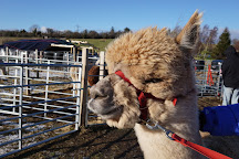 BobCat Alpacas, Edinburgh, United Kingdom