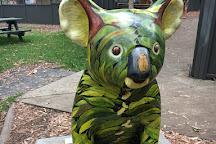 Koala Hospital, Port Macquarie, Australia