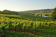 Ridge Vineyards Lytton Springs, Healdsburg, United States