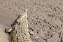 Crocodile Man Tour The Original, Jaco, Costa Rica