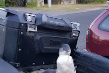 Low Head Penguin Tours, Low Head, Australia