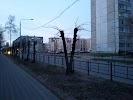 Школа № 53, улица Зинаиды Коноплянниковой на фото Твери