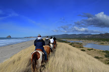 Green Acres Beach & Trail Rides, Pacific City, United States