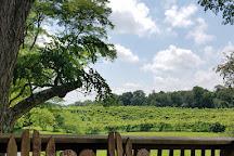 North Mountain Vineyard and Winery, Maurertown, United States