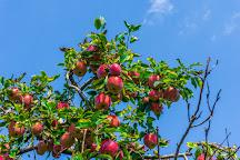 Hartland Family Orchard, Markham, United States