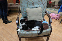 Tabby's Place: A Cat Sanctuary, Ringoes, United States