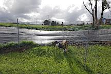 Honomu Goat Dairy, Honomu, United States
