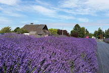 The Lavender Connection, Sequim, United States