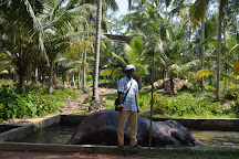Charli Tours, Ahungalla, Sri Lanka