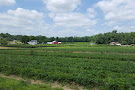 George Schmidt Berry Farm