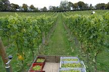 Daws Hill Vineyard, Radnage, United Kingdom