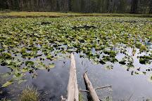 Lily Pad Lake, Silverthorne, United States