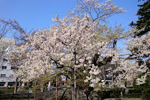 Rock-breaking Cherry Tree, Morioka, Japan