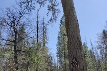 Wawona Visitor Center, Yosemite National Park, United States