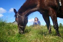 Savalen hestesenter, Tynset, Norway