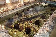 Bay of the Bones Museum, Ohrid, Republic of North Macedonia