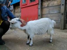 Sheep london