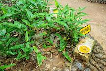 Surathura Spice Garden, Matale, Sri Lanka