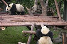 Giant Panda Breeding Research Base (Xiongmao Jidi), Chengdu, China