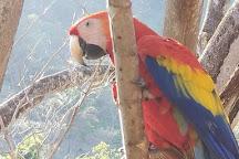 The Ara Project, Punta Islita, Costa Rica