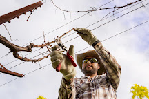 Paradigm Winery, Oakville, United States