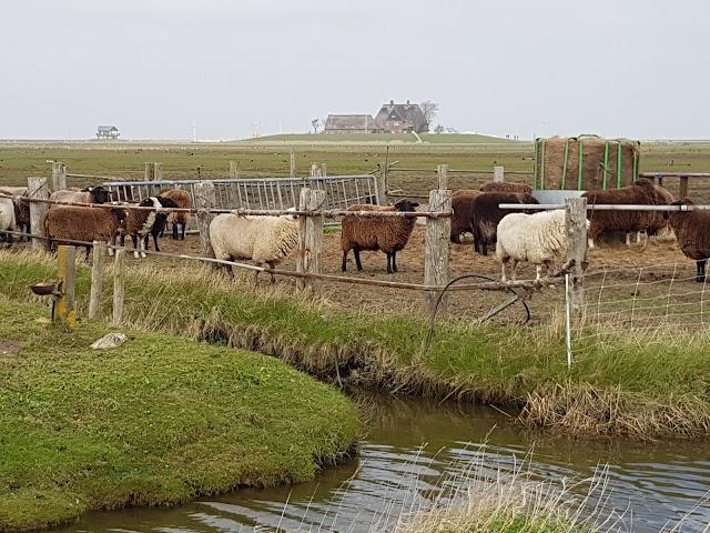 Nieders. Wattenmeer National Park