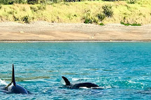 SpotX Fishing Charters, Russell, New Zealand
